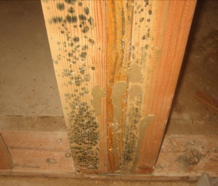 Hidden Mold Growth