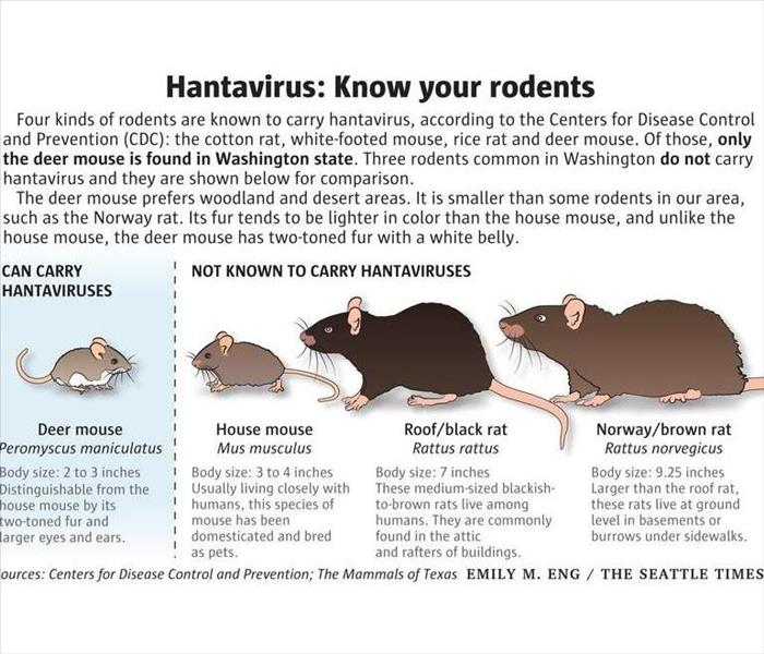 informative graphic about hantavirus