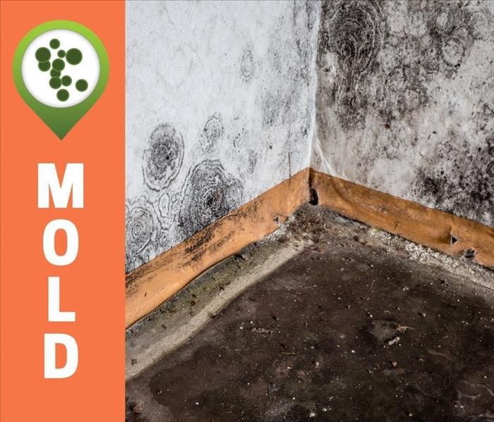 Picture of Mold Growing On Walls