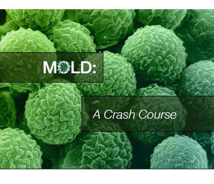 Mold Remediation Mold: A Crash Course